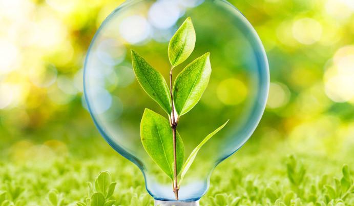 servicii business tehnologii eco